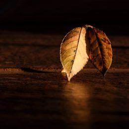 podzim1